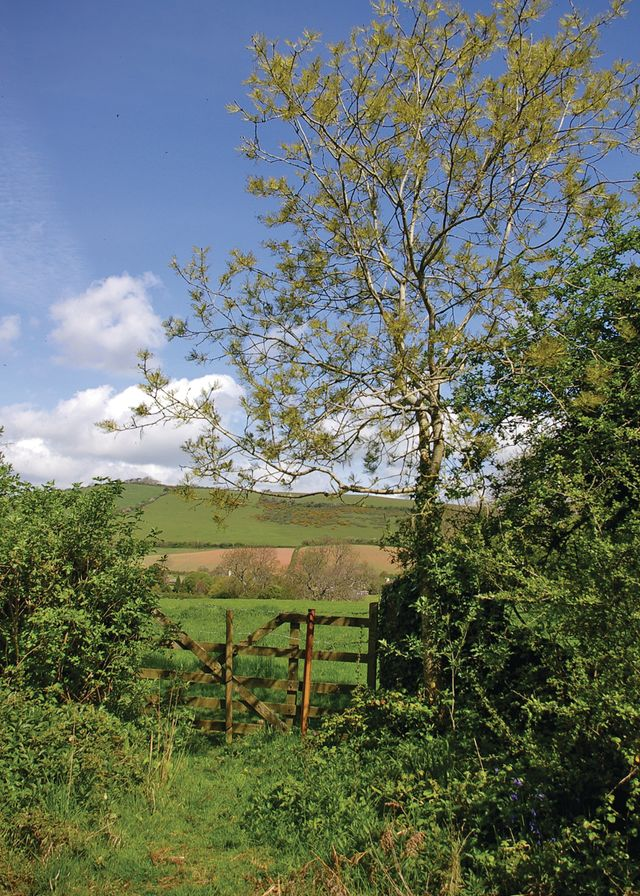 Whitehill-Country-Park